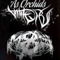 8ms & As Orchids Wither split
